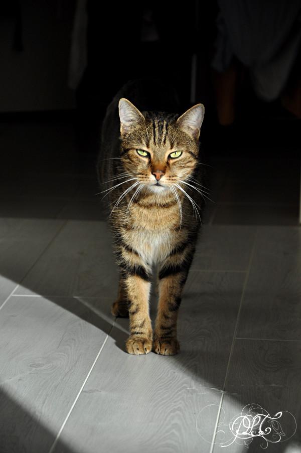 Prendre le temps - Blogueuse à chats - chat Neko