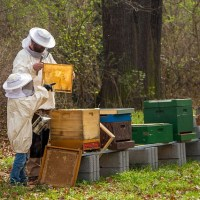 Fabriquer une ruche pour abeilles : Pourquoi et comment ?