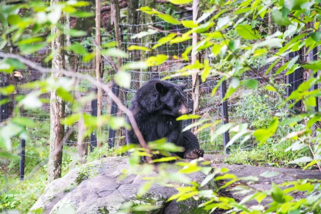 ours parc omega