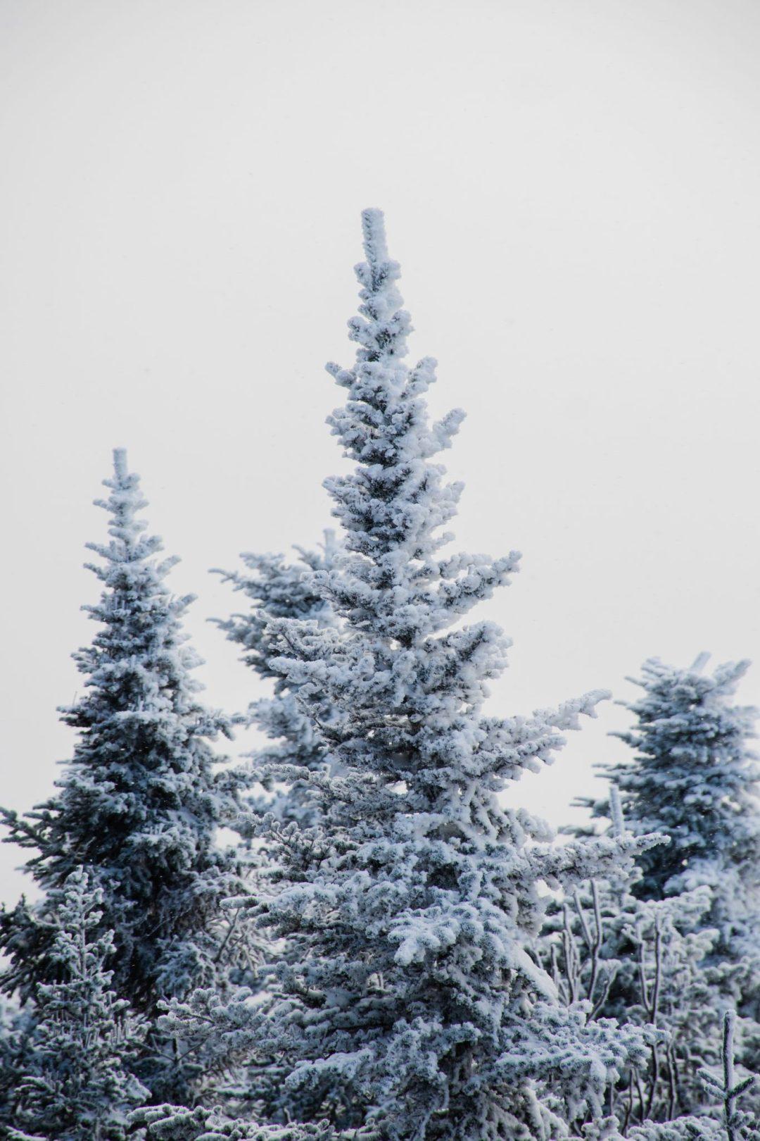 epinette megantic neige