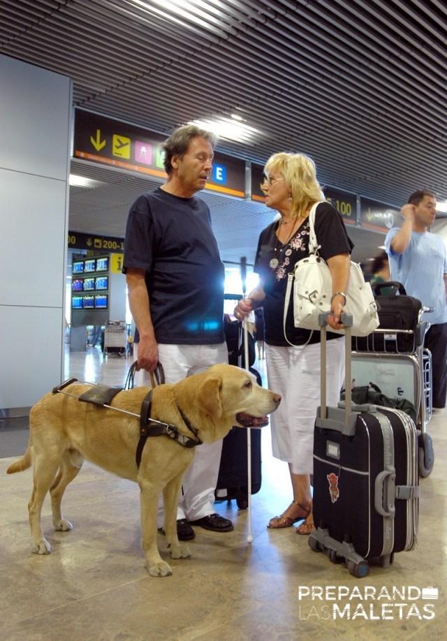 preparando-las-maletas-mascotas-2