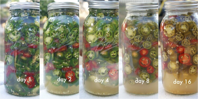 Lacto-Fermented Jalapeño Peppers - easy recipe with unrefined salt to top your favorite dishes. A great Paleo, GAPS or Whole30 condiment.