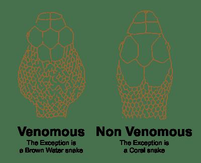 Survive A Poisonous Snake Bite