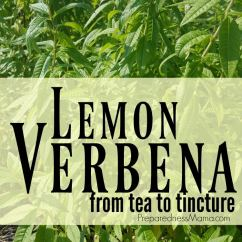 Long Kitchen Light Cabinets From Home Depot Growing & Using Lemon Verbena - Tea To Tincture