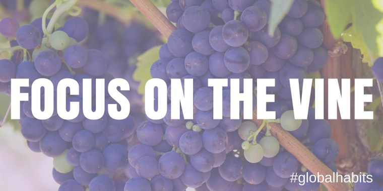 Focus on the Vine