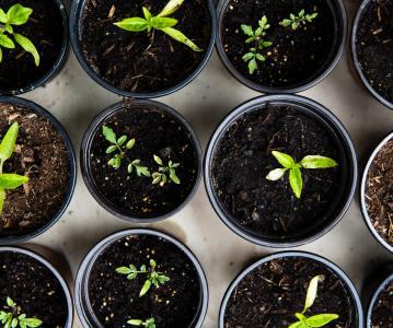Church Planter/ Church Growth Specialist