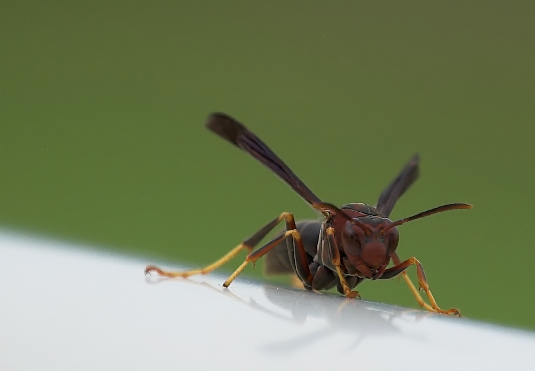 How To KILL Wasps theyre pure evil anyway  PrepCabincom