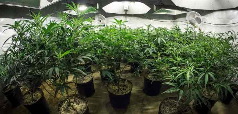 The Top Marijuana Stocks Investors Are Buying Up - Should