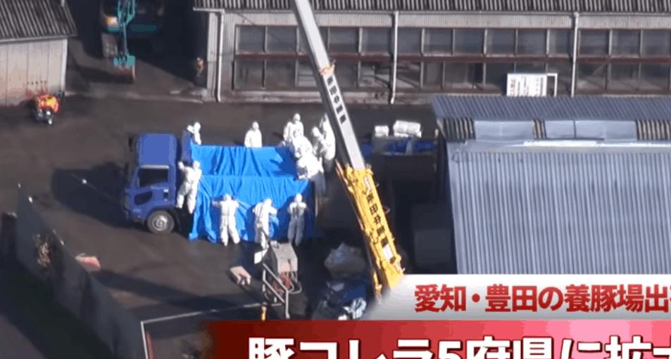swine fever epidemic japan
