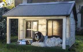 meteorite dog house costa rica
