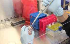 pittsburgh coronavirus researcher murdered
