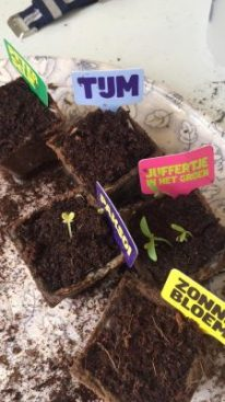 What to plant tomatoes in to grow them