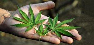 Marijuana Kills Cancer Cells, Admits the U.S. National Cancer Institute