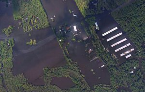 Florence flooding engulfs hog farms and chicken houses – Dead: 3.4 million chickens, 5000+ pigs