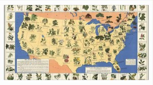 What grows where? A medicinal plant map for your survival kit