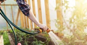 How to Water Your Garden (Even If There's a Drought)