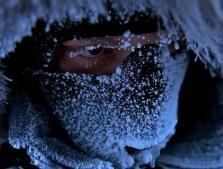 surviving polar conditions