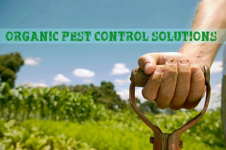 Prepper's Will - Organic Pest Control