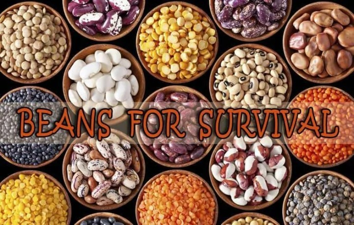 Prepper's Will - Beans for Survival