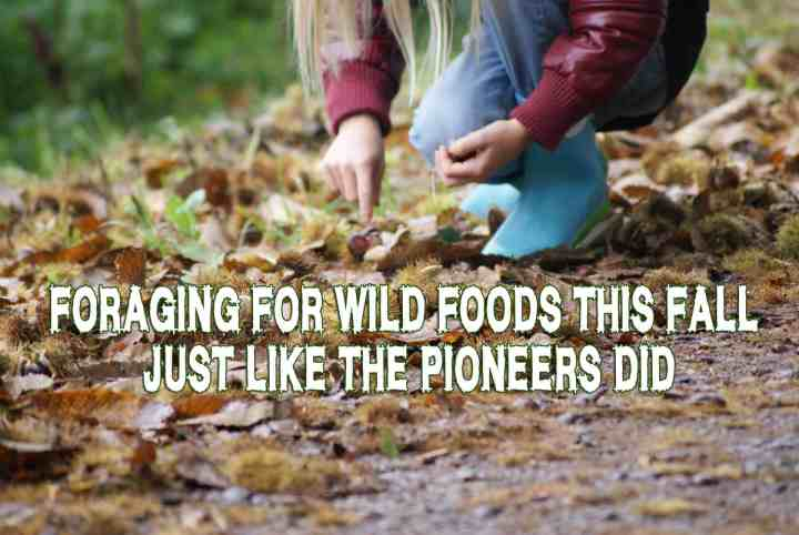 Foraging for wild foods this fall, just like the pioneers did