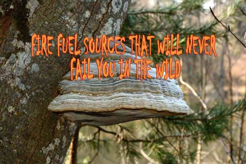Fire fuel sources that will never fail you in the wild