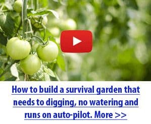 How to build a survival garden