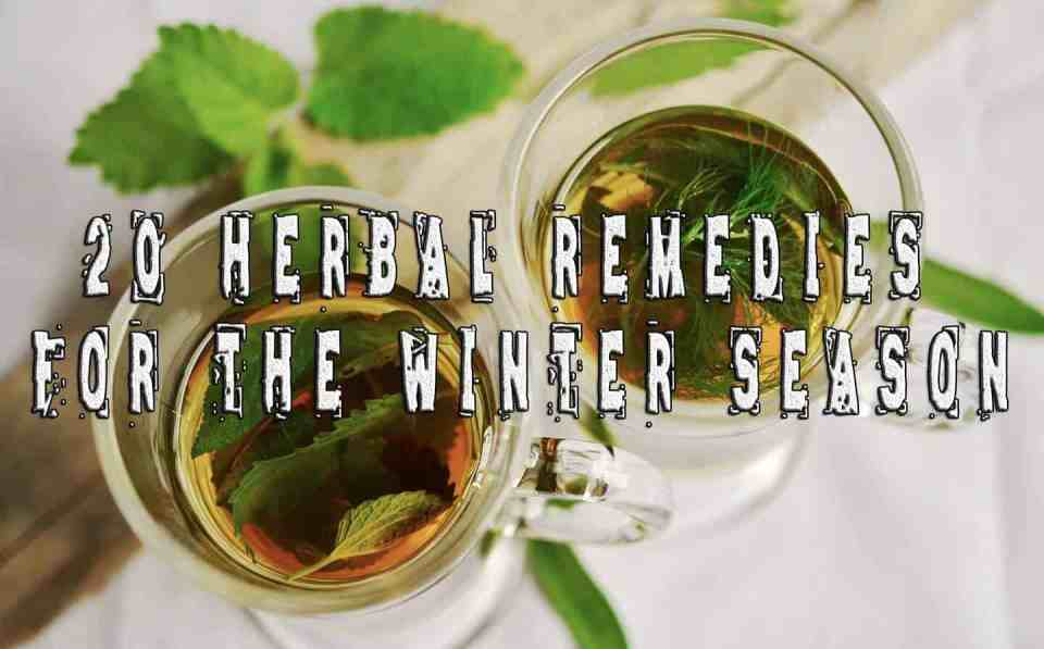 20 Herbal Remedies for the Winter Season