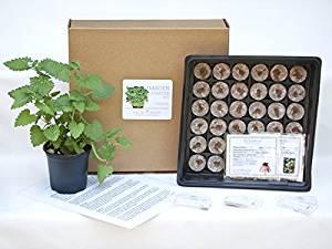 Medicinal Herbs Garden Kit