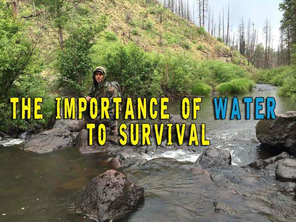 The importance of water to survival