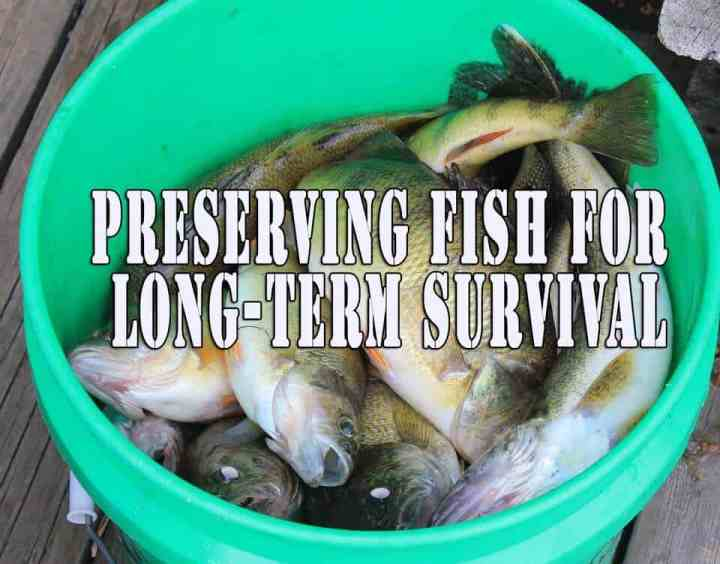 Preserving fish for long-term survival