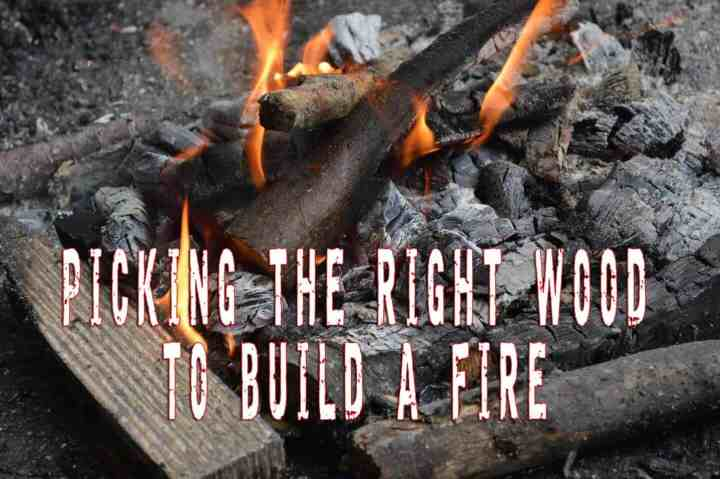 Picking The Right Wood To Build A Fire In The Wild