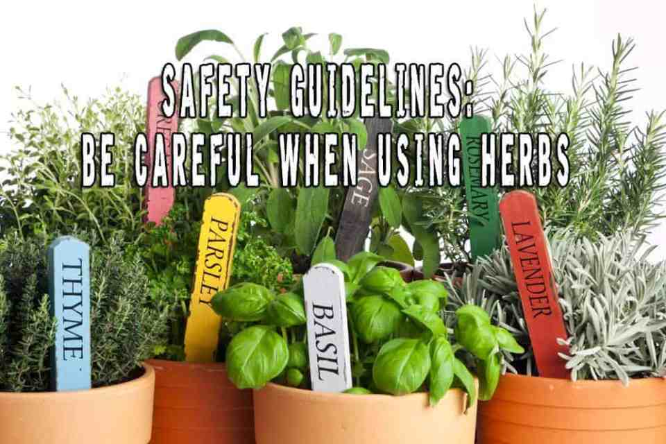 Safety Guidelines: Be Careful When Using Herbs
