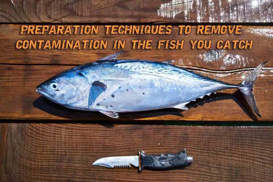 Preparation Techniques To Remove Contamination In The Fish You Catch