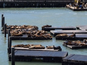 Watch sea lions play on the docks.