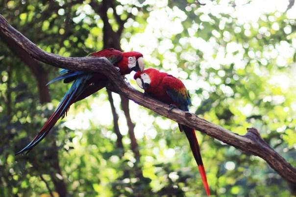guayaquil samme esmeraldas ambato