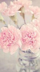 iphone pink peonies wallpapers floral peony vase