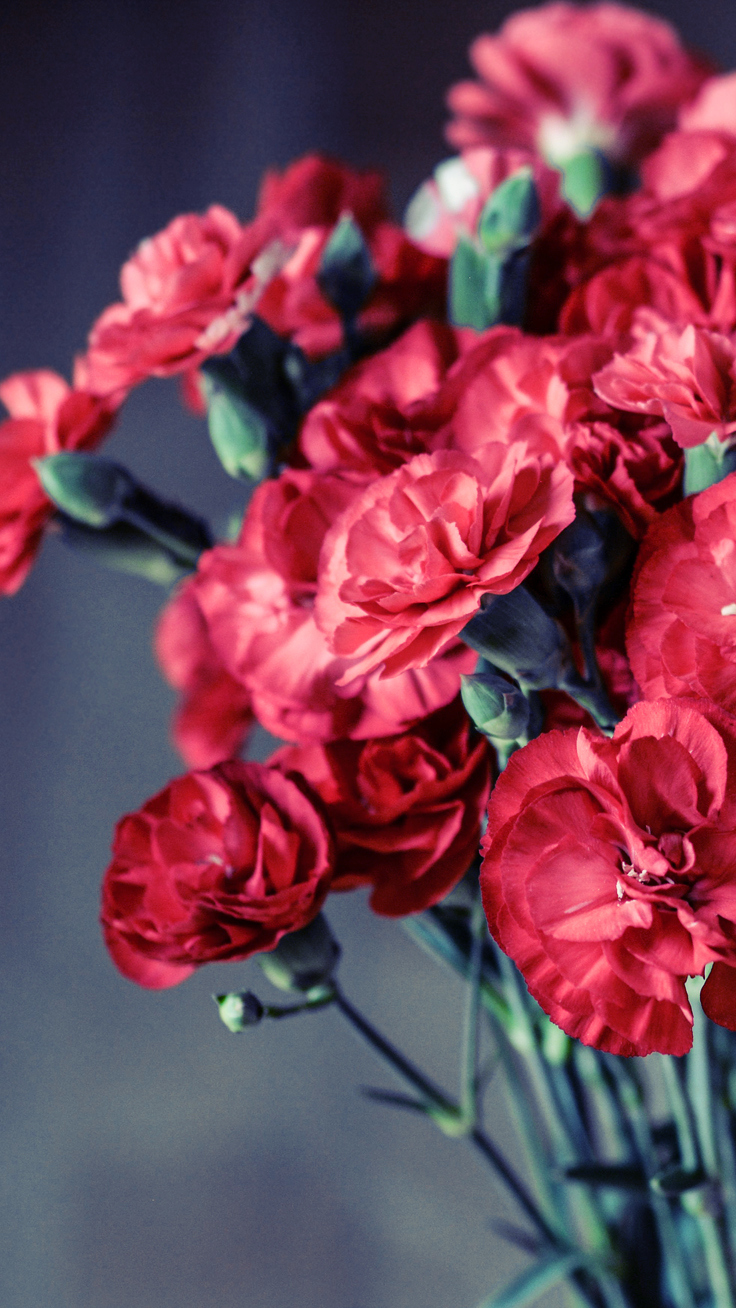 Rainy Season Wallpapers With Quotes Hd Red Flowers Download All Happy Valentine S Day Iphone