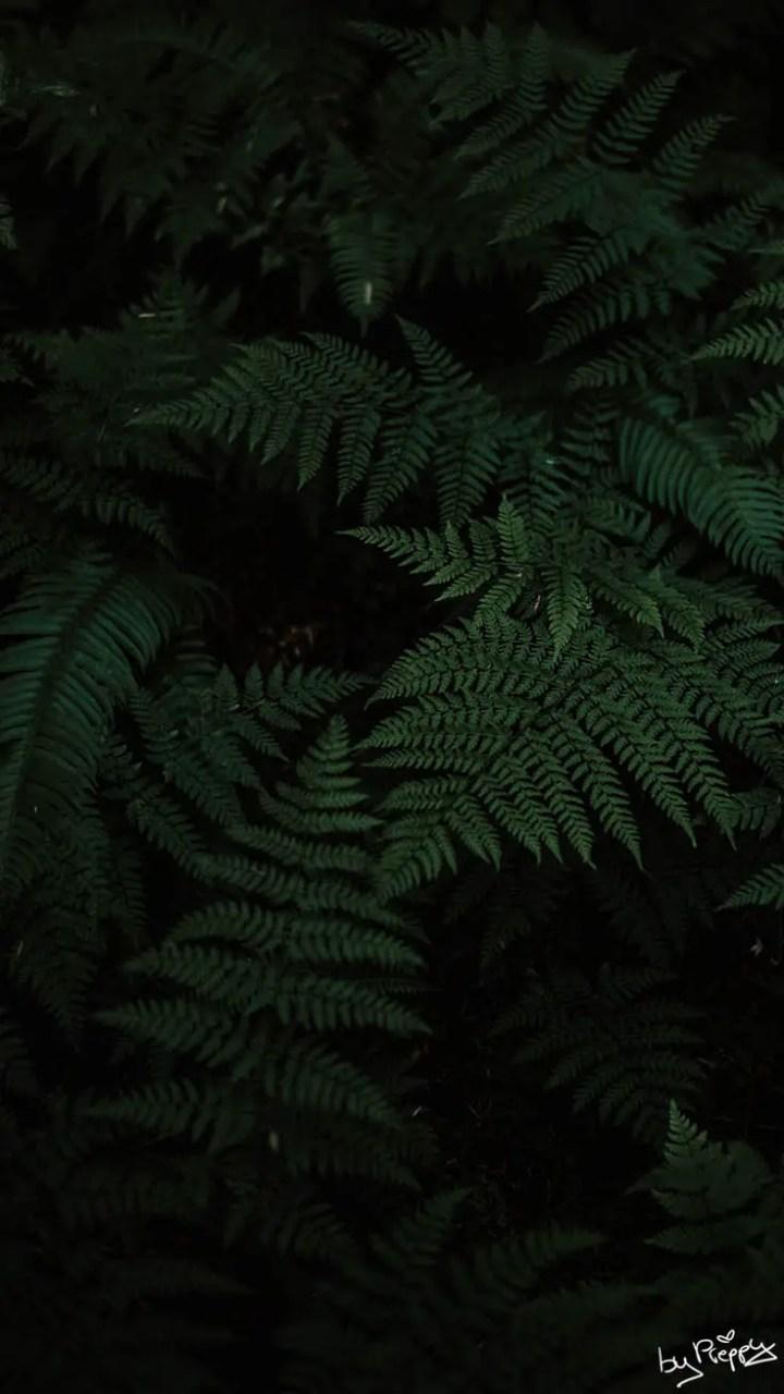 Jungle Wallpaper For Iphone Joshview Co