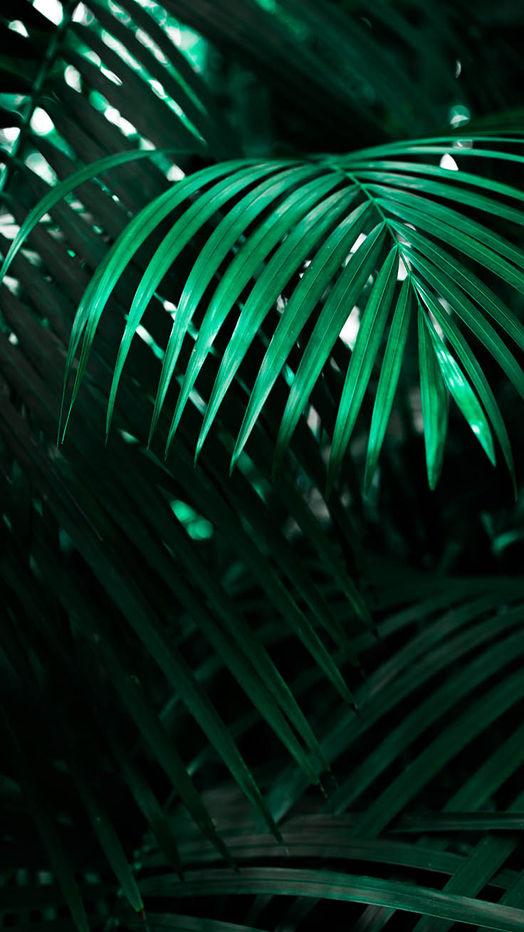 Preppy Iphone Wallpaper Welcome To The Jungle Iphone Xs Max Wallpapers Preppy