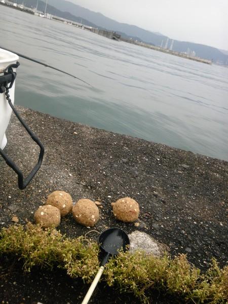 チヌ狙いの紀州釣り ダンゴ