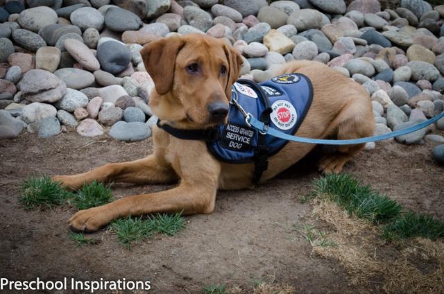A Girl and Her Lifesaving Dog ~ Preschool Inspirations-2