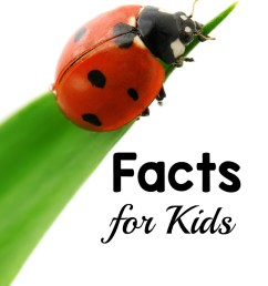 here are 20 ladybug facts for kids while doing a ladybug theme learning about ladybugs [ 800 x 1200 Pixel ]