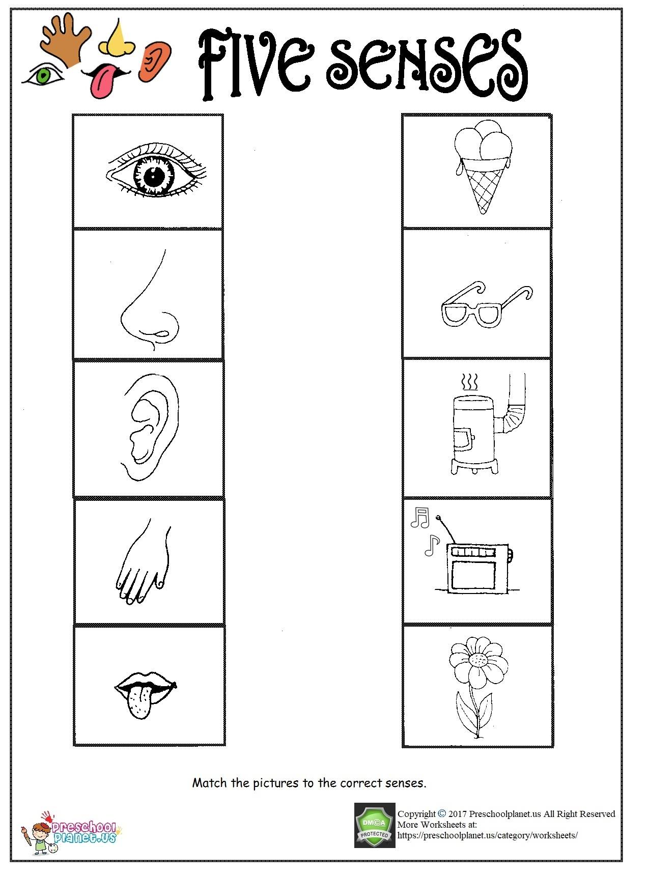 Your Sense Of Hearing Worksheet