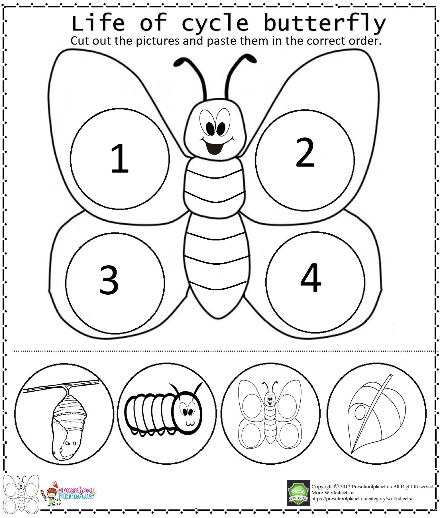 Life Of Cycle Butterfly Worksheet Preschoolplanet
