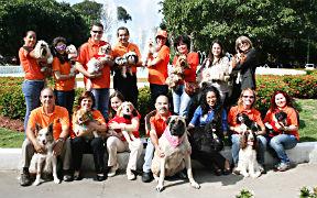 Puerto Rico Therapy Dogs es una organización certificada en terapia canina cuyo objetivo es crear un grupo de individuos caritativos, voluntarios, que junto a sus caninos compartan su tiempo  con personas que necesiten de un momento de alegría en sus vidas mediante diferentes actividades y presentaciones.  Estas actividades incluyen, pero no se limitan a, visitas a hospitales, centros de necesidades especiales y hogares de envejecientes, escuelas e iglesias. (Foto/Suministrada)