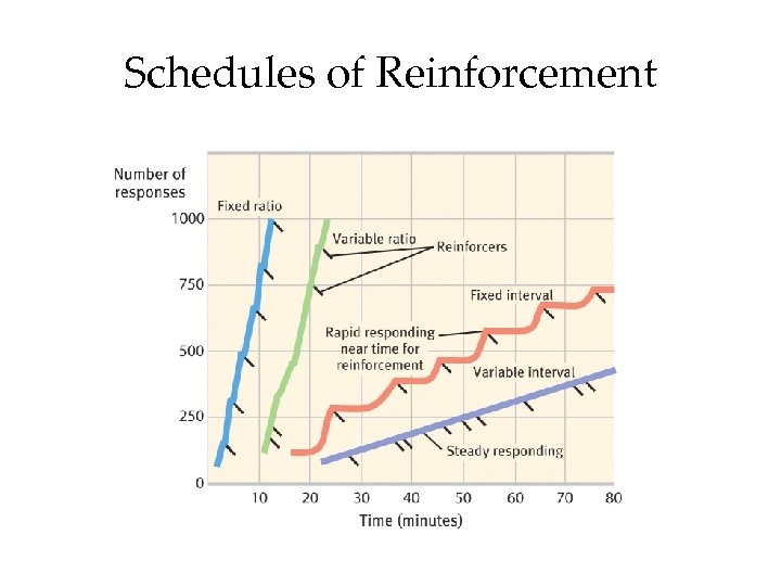 Reinforcement Schedules 1 Continuous Reinforcement Reinforces the desired