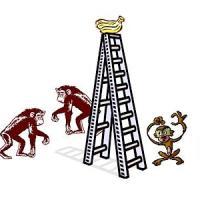 A Experiência dos Macacos.