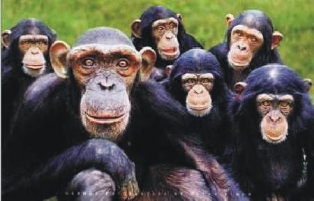 A Experiência dos Macacos. (2/6)