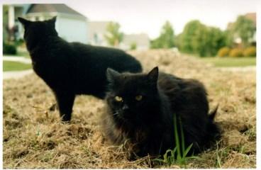 House Cats Pretending