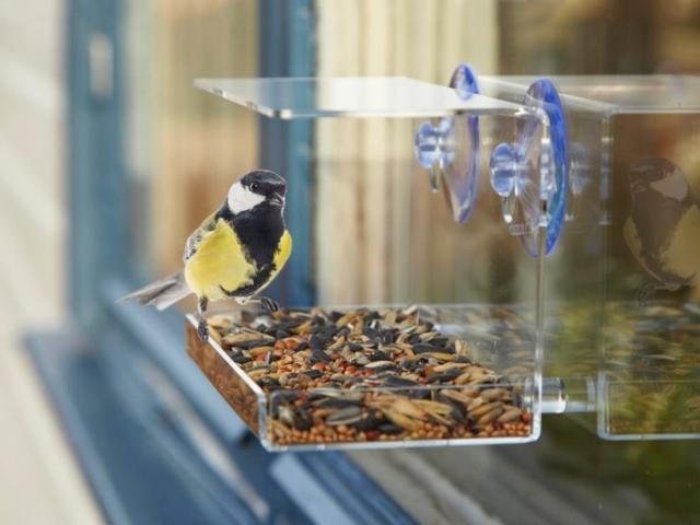 Utenu® Fönster-fågelmatare Image